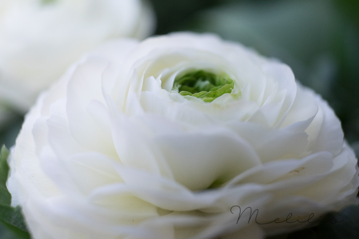 Blumen Liebe