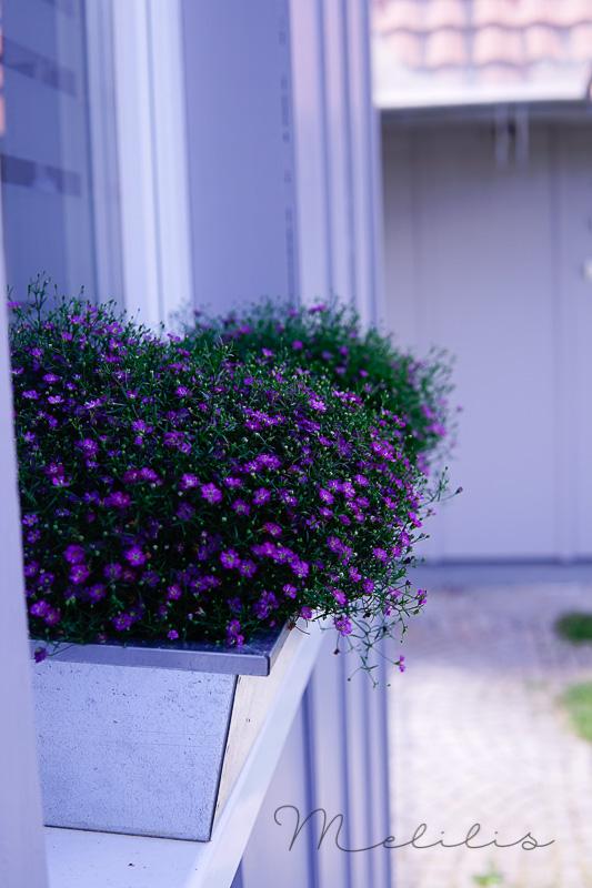 Fensterbank Sommer