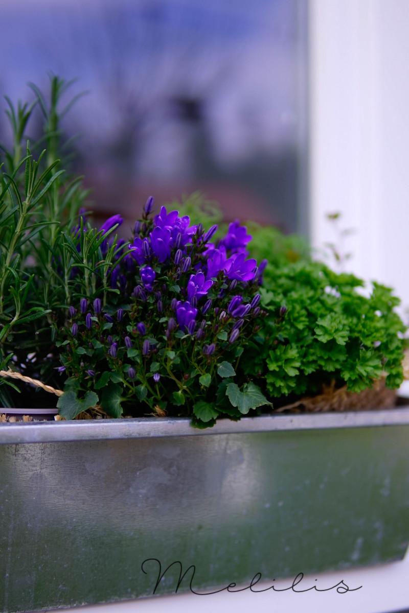 Fensterbank Blumen